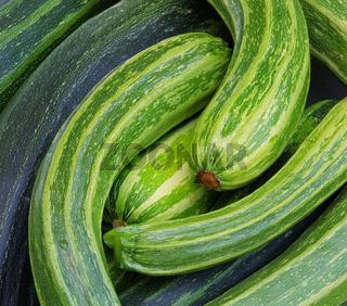 Zucchini - courgette 11