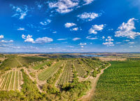 Vineyards in Palava, Czech Republic