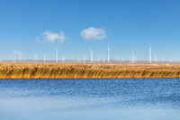 wind farm by the lake
