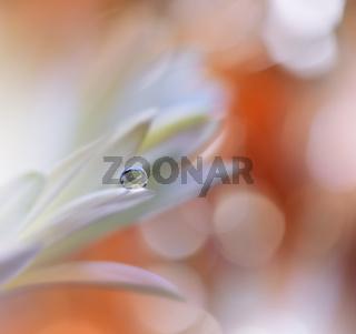 Beautiful Macro Shot of Magic Flowers.Border Art Design.Magic Light.Extreme Close up Photography.