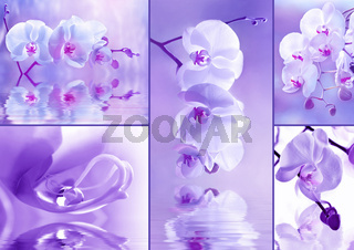 Orchideen Collage