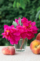 Ripe large peaches and red peony in water glass isolated on green.