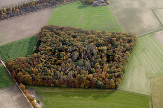 Herbstliche Waldfläche im Münsterland.