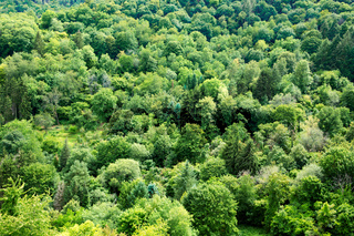 Summer forest background, beautiful bird eye view on green trees .