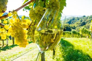 Weinglas im Weingarten