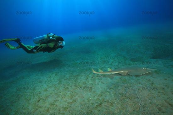 Scuba diver and halavi guitarfish