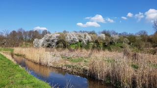 Die Uferzone vom Tegeler Fließ und blühende Schlehenbüsche im April
