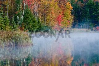 Foliage colors