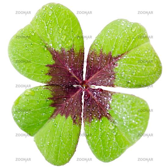 four-leaf cloverleaf