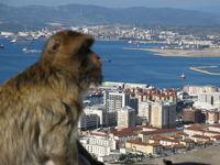 ape looks onto Gibraltar