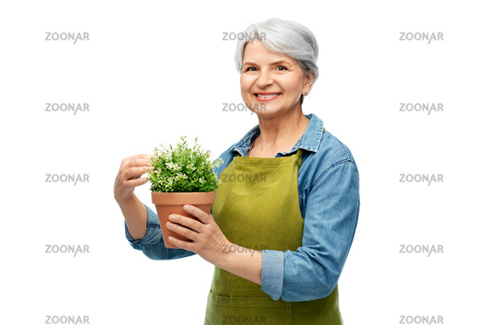smiling senior woman in garden apron with flower