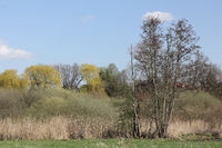Riparian landscape on the Tegeler Fließ in Schildow in the state of Brandenburg in springtime
