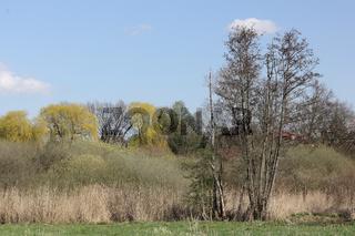Auenlandschaft am Tegeler Fließ in Schildow im Land Brandenburg im Frühling