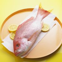 Whole Red Snapper bxp159835h