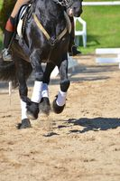 Horse performing dressage manouevres