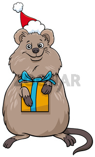 cartoon quokka animal character with gift on Christmas time