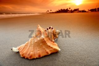 shell on sand under sunset sky