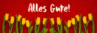 Baner Of Yellow Tulip Flowers, Red Background, Alles Gute Means Best Wishes