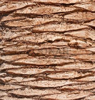 Texture-of-bole-of-palm-tree-panoramic-shot