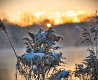 winter morning by the lake