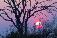 Sunset, Chobe National Park, Botswana