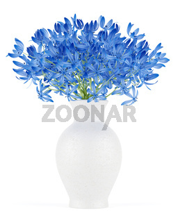 blue flowers in vase isolated on white background