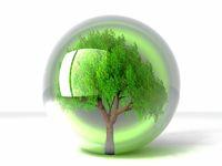 trre in bubble