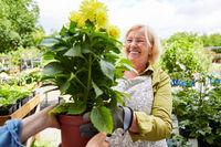 Frau als Gärtnerin in Gärtnerei mit Topfpflanze