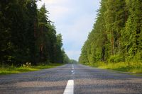Bottom view of a wet asphalt road along the forest.