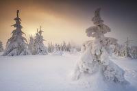 Winter magic Dreisessel