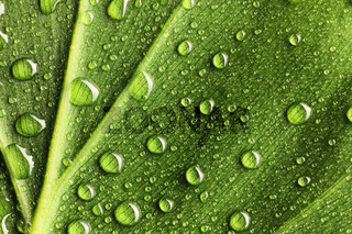 Water drops on leaf
