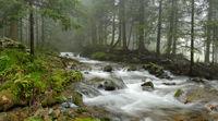 mountain river in Carpathian forest