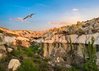 Bird over Cappadocia