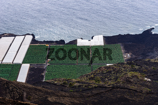 Banana plantation with greenhouses in a volcanic landscape in La Palma