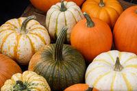Many multi colored decorative pumpkin