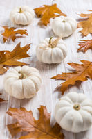 Happy thanksgiving - still life with white pumpkins and autumn leaves on white