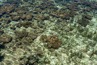 Coral reef just below the water surface near Togian island Poyalisa in Sulawesi