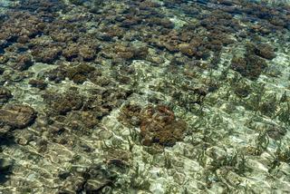 Korallenriff dicht unter der Wasseroberfläche nahe der Togian Insel Poyalisa in Sulawesi