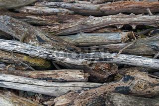Treibholz / drift wood