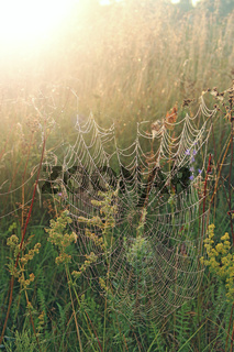 Spider web with drops of dew at dawn in sunny rays. Sunlights in morning