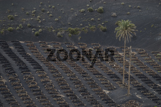 Weinanbau bei geria, Lanzarote