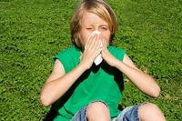 child with hayfever allergy sneezing into tissue