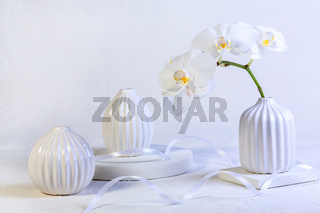 Branch of a white orchid in a vase.