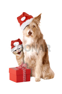 Cat and dog with Santa hat and gift