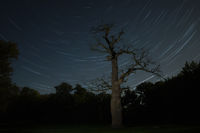 old oak tree in front of starry sky near Ivenack