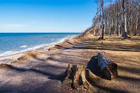 Gespensterwald an der Ostseeküste bei Nienhagen