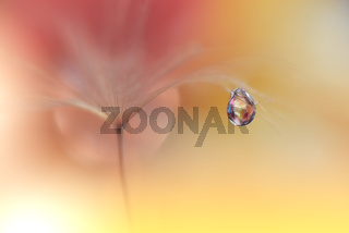 Beautiful Nature Background.Floral Art Design.Abstract Macro Photography.Pastel Flower.Dandelion.