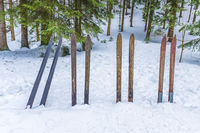 Old wooden skis stuck in the snow in the forrest. Vintage winter sports background.