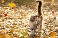 Funny kitten with a fluffy tail on an autumn background