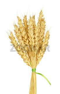 Wheat stems